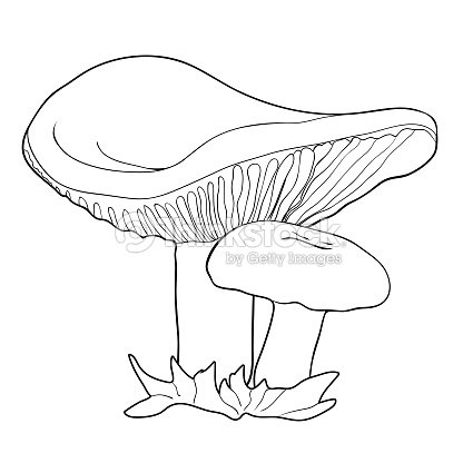 Para Colorear Con Ilustración De Vector De Setas De Setas Naturales ...