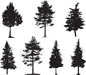 Coniferous trees silhouettes collection on white background
