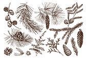 Vector collection of hand drawn conifers illustration. Vintage evergreen plants sketch set - fir, pine, spruce, larch, juniper, cedar, cypress. Christmas decoration elements.