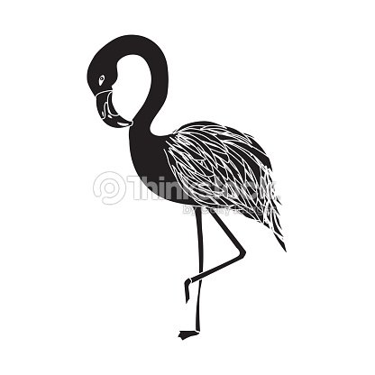 Contour beauty and exotic flamingo bird animal