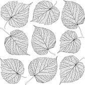 contoured linden leaves isolated on white background