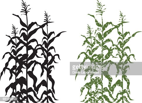 Corn Stalk Plants In Black And Green Grunge Vector ...