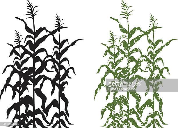 Corn Stalk Plants in Black and Green Grunge Vector Illustration