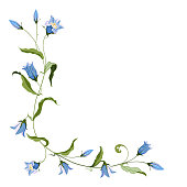 Corner composition of hand drawn blue bell flower for design on white background. Vector illustration