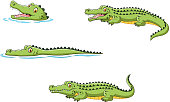 Illustration of Crocodile collection set