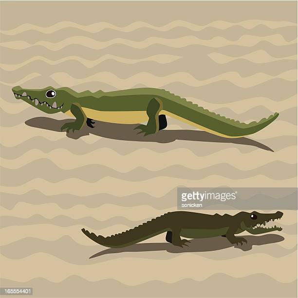 crocodile walking