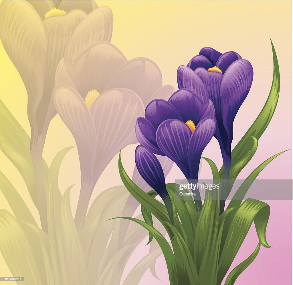 Crocuses. : Clipart vectoriel