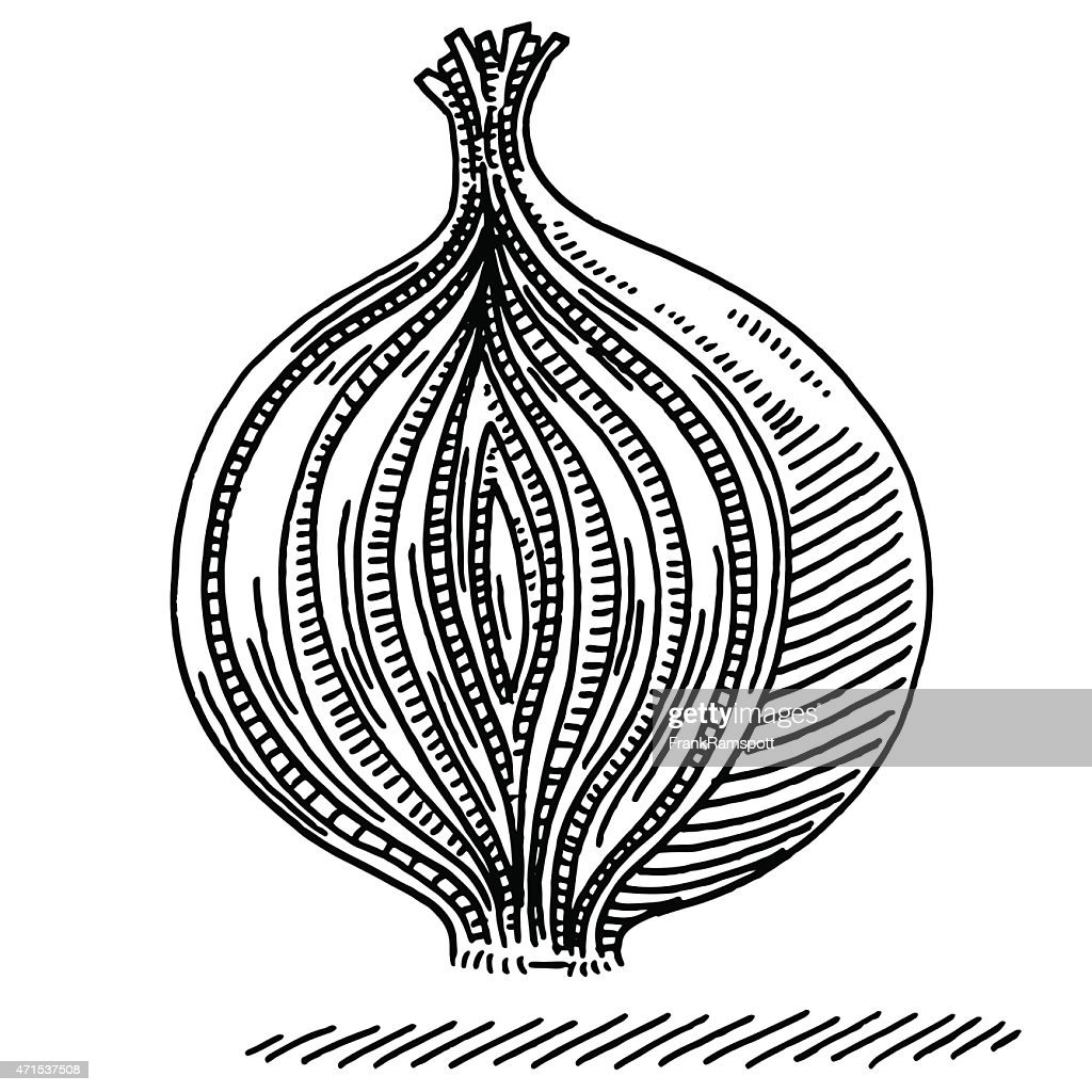 Cross Section Cut Onion Layer Principle Drawing Vector Art ...