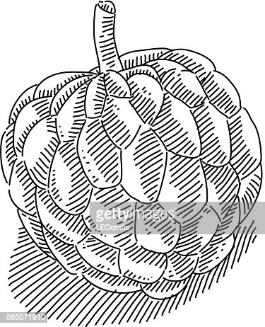 Custard Apple Drawing Vector Art | Getty Images