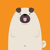 cute big fat Pug dog on orange background