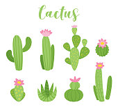 Cute cactus vector illustration for any purposes. Green plant design, isolated on white background.