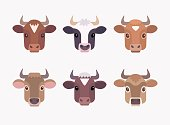 Set of vector color images of six breeds dairy cows: Ayrshire, Holstein, Guernsey, Brown Swiss, Jersey and Milking Shorthorn.