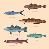 Set of six sea and ocean fish: sea trout, capelin, burbot, haddock, milkfish, hake in flat style. Cute cartoon flat design fishes in light background isolated.
