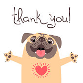 Cute dog says thank you. Pug with heart full of gratitude. Vector illustration.