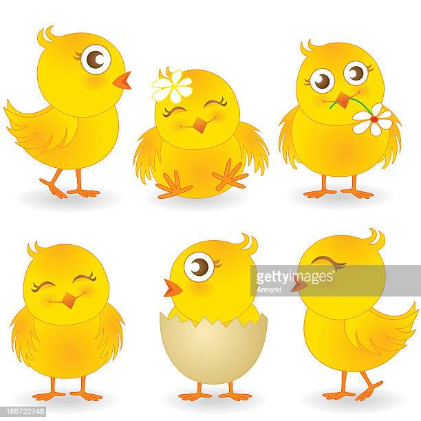 Cute Easter Chicks Vector Illustration Collection