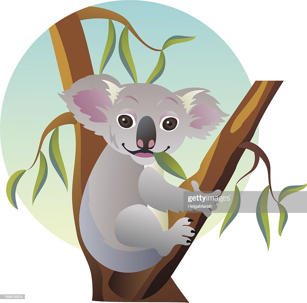 cute eating baby koala bear sitting on australian eucalyptus tree