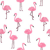 Cute flamingo background. Vector hand drawn seamless pattern