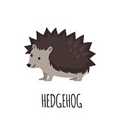 Cute Hedgehog in flat style isolated on white background. Vector illustration. Forest animal. Cartoon Hedgehog.