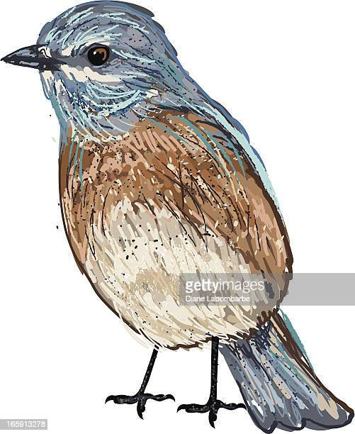Cute Sketchy Eastern Bluebird