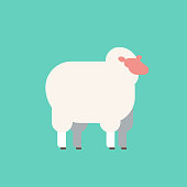 cute white sheep wool farm domestic animals breeding concept flat vector illustration