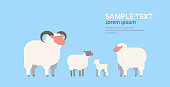cute white sheeps and rams flock wool farm domestic animals breeding concept flat horizontal copy space vector illustration