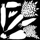 Daikon, vegetable, vector