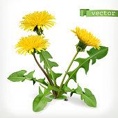 Dandelion flowers, 3d vector icon