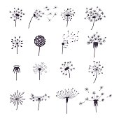 Dandelion Fluffy Flower and Seeds Silhouette Set Decoration Summer Plant. Vector illustration