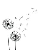 Dandelion  - vector illustration isolated on white background
