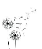 Dandelion  - vector illustration isolated on white background
