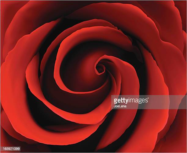 Deep vector illustration of red rose
