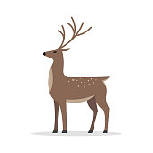 Young Deer cartoon character. Deer male In Flat Style, isolated on white background. vector illustration