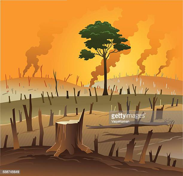Deforestation Stock Illustrations and Cartoons Getty Images