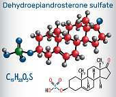 Dehydroepiandrosterone sulfate DHEA-S (natural androgen steroid hormone ) - structural chemical formula and molecule model. Vector illustration
