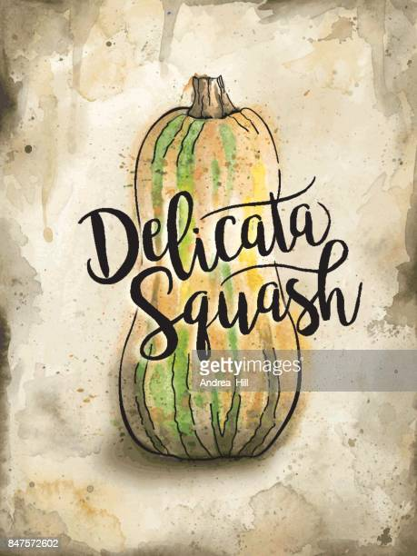 Delicata Squash Painted in Watercolor on Rustic Brown Background. Vector EPS10