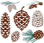 Clip art collection of various pinecones