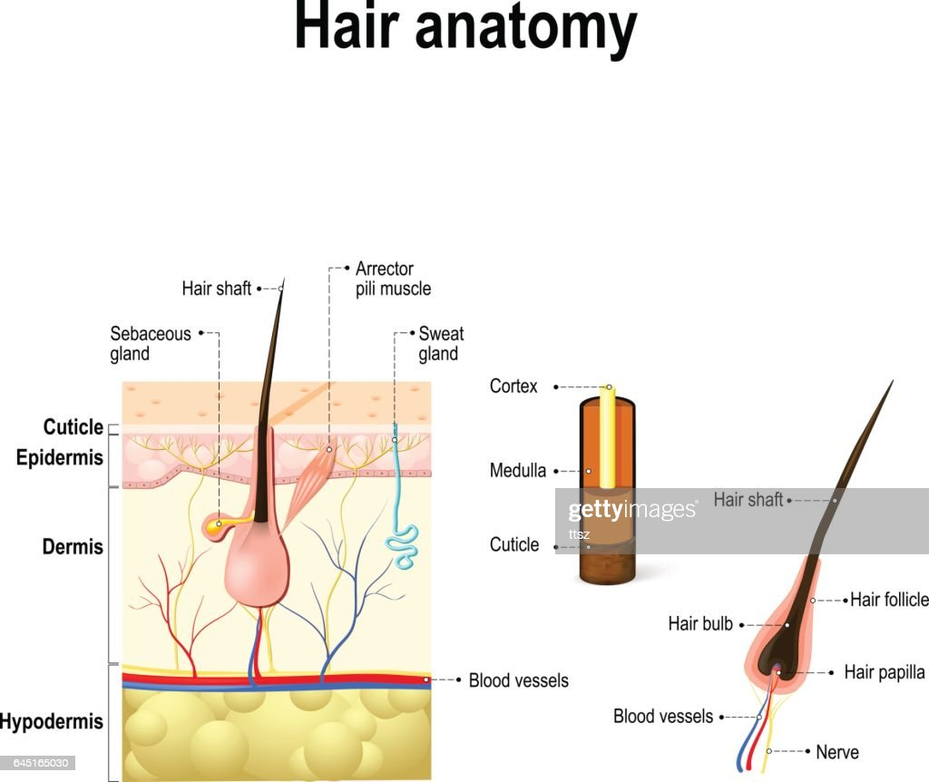 The Hair Diagram Videos - DIY Wiring Diagrams •