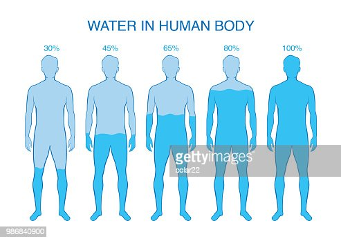 Difference percentage of water in the human body. : stock vector