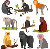 Different monkey character bread animal wild vector set illustration. Macaque nature primate cartoon wild zoo cheerful gorilla ape chimpanzee wildlife jungle animal.