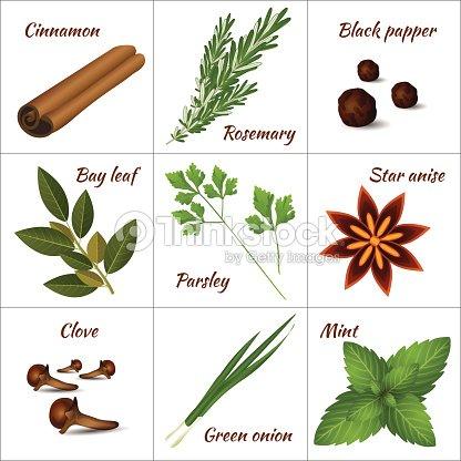 diff rentes herbes m dicinales ou des herbes aromatiques et des pices th rapeutiques clipart. Black Bedroom Furniture Sets. Home Design Ideas