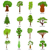 Different Green Tree Types and Name Include of Elm, Birch, Eucalyptus, Cedar, Dracaena, Oak and Pine Icons Set. Vector illustration of Various Type Wood