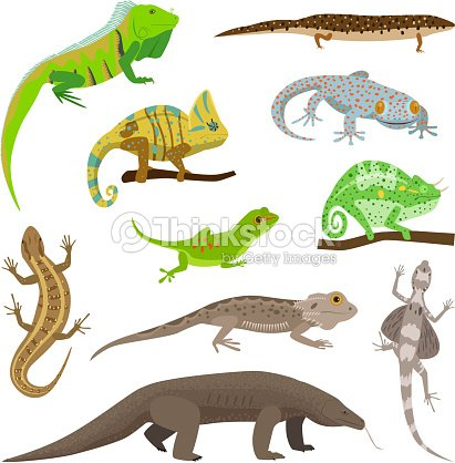Different lizard reptile animals isolated on white vector illustration