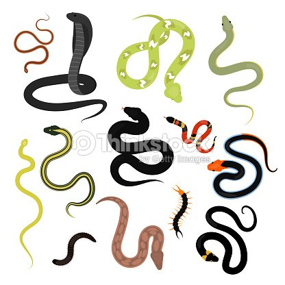 Different snake reptile animals cartoon vector set