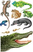 Different types of reptiles illustration