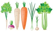 Different types of root vegetables illustration