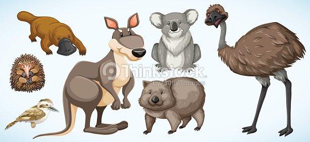 different types of wild animals in australia ベクトルアート thinkstock