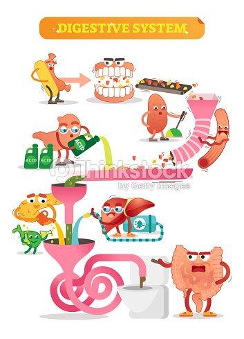 Ilustración De Vector De Sistema Digestivo Esquema Cómico Con La ...