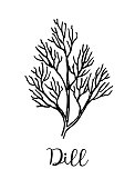 Dill ink sketch. Isolated on white background. Hand drawn vector illustration. Retro style.