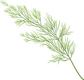 sprig of dill isolated on white background