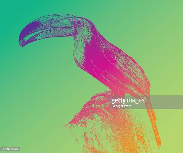 Entdecken Mexiko. Bunten Tukan Verzehr von Obst in der Riviera Maya
